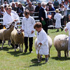 GYS 14_145_sheep young handlers