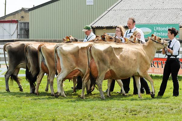 GYS 14_087_dairy GV