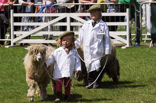 GYS 14_179_sheep young handlers