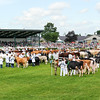 GYS 14_190_cattle parade