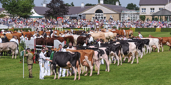 GYS 14_193_cattle parade