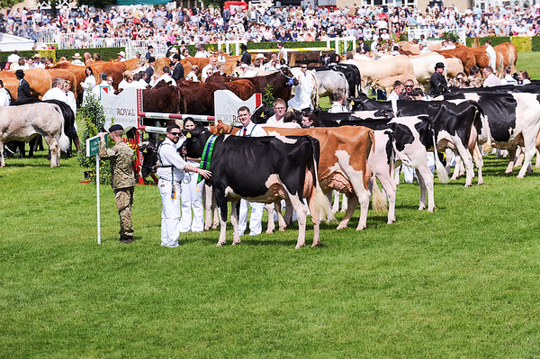 GYS 14_192_cattle parade
