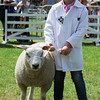GYS 14_166_sheep young handlers