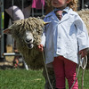 GYS 14_174_sheep young handlers