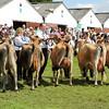 GYS 14_086_dairy GV