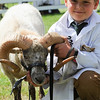GYS 14_170_sheep young handlers