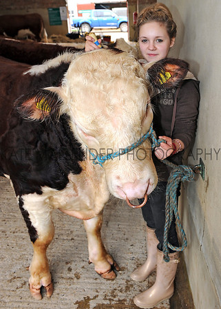 GYS 2012 Sophie Harvey aged 16 from Glasgow prepares 13 month old Hereford Humphrey.