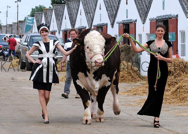 GYS 2012 Models Ruth Summerskill & Olivia Nolan with 3 year old Hereford bull Flynn