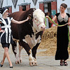 GYS 2012 Ruth Summerskill (left) & Olivia Nolan wih 3 yearold Hereford bull Flynn at the G Yorks Show.