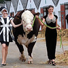 GYS 2012 Models Ruth Summerskill (left) & Olivia Nolan wih 3 yearold Hereford bull Flynn at the G Yorks Show.