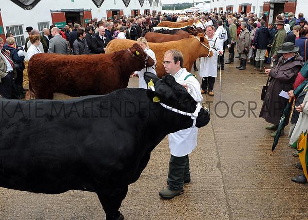 072 Beef gv