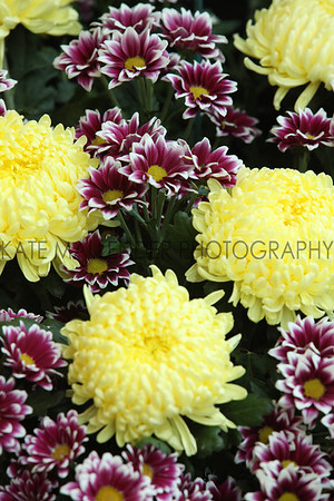 gys 2012 Tuesday: Flower Blooms in the Flower Show<br /> pic: Doug Jackson