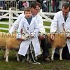 051 sheep gv