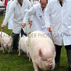 055 pigs gv