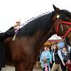 060 horse gv