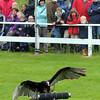 048 Birds of prey