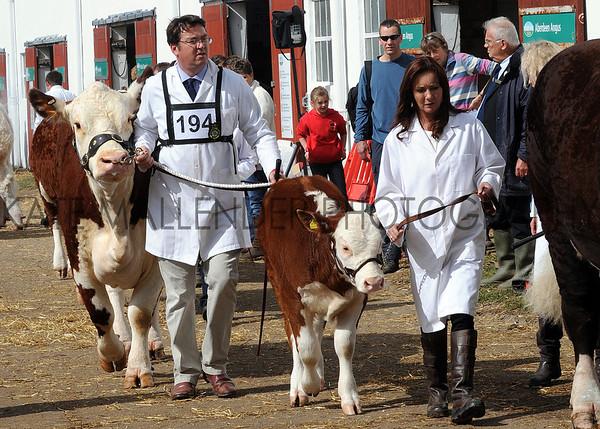 014 cattle gv
