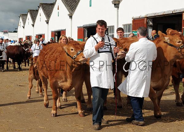 020 cattle gv