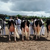 078 dairy gv