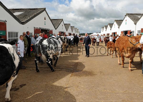 019 cattle gv