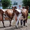 058 dairy gv