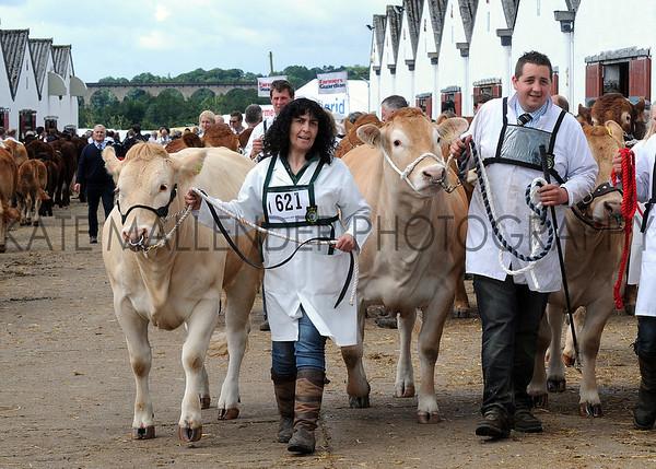 033 cattle gv