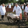 GYS 2012 Wednesday:The pig judging continues as the pigs seem very happy with the mud. This one seems determined to roll in it. 19, MrAM and Mrs JM Walton from Chester.<br /> pic: doug jackson