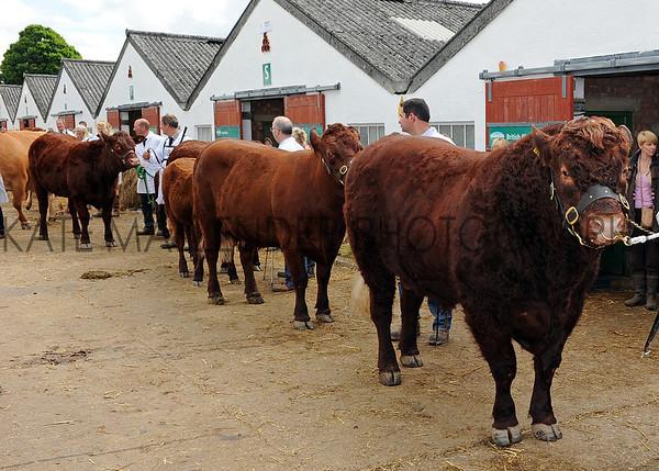 018 cattle gv
