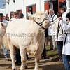 028 cattle gv
