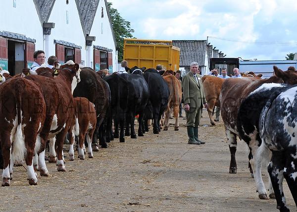 026 cattle gv