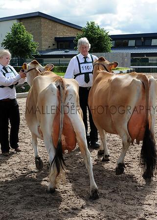 054 dairy gv