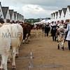 029 cattle gv