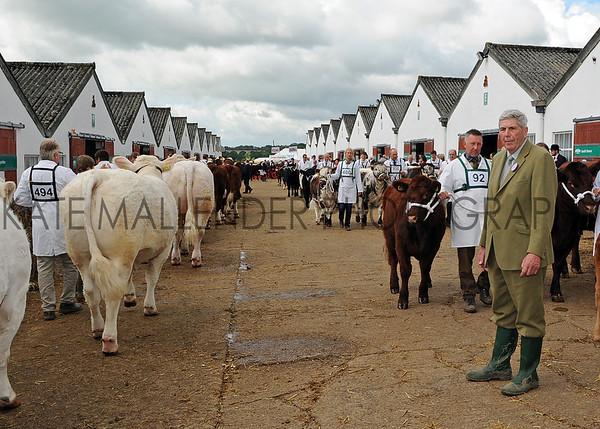 030 cattle gv