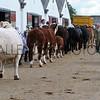 025 cattle gv