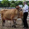 057 dairy gv