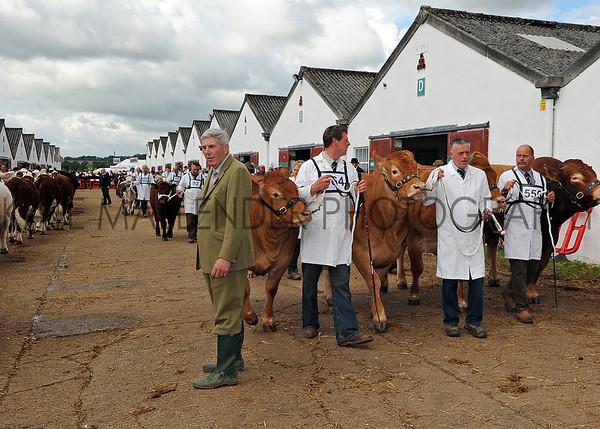031 cattle gv