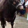 021 cattle gv