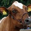092 dairy gv
