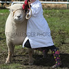 GYS 2012 Wednesday: Young handlers in the sheep ring.<br /> pic: doug jackson