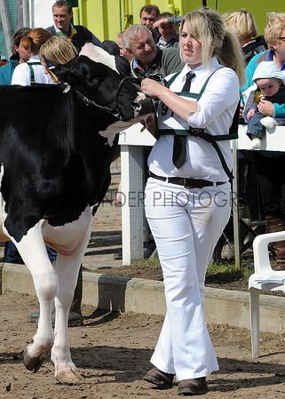 088 dairy young handler