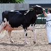 083 dairy gv