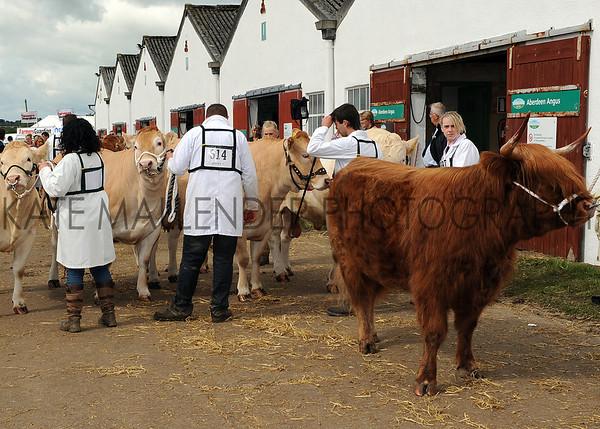 022 cattle gv