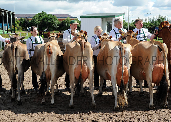 076 dairy gv