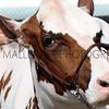 068 dairy gv