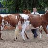 052 dairy gv