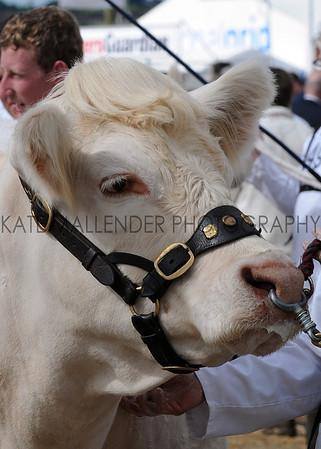 027 cattle gv
