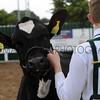 102 dairy gv