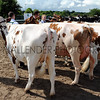 067 dairy gv