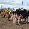 050 dairy gv