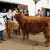 017 cattle gv